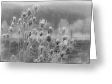 Frozen Teasel Greeting Card by Jean Noren