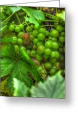 Fruit Bearing Greeting Card by Heidi Smith