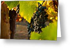 Fruit of the Vine Greeting Card by Bill Gallagher
