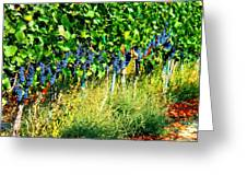 Fruit Of The Vine Greeting Card by Kay Gilley