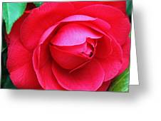 Fuchsia Camellia In Pastel Greeting Card by Suzanne Gaff