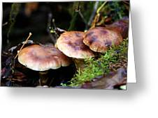 Fungus Among Us II Greeting Card by Jeanette C Landstrom