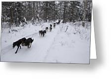 Fur Rondy Races Greeting Card by Tim Grams