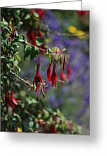 Fuschia Greeting Card by Carol  Eliassen