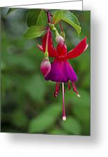 Fuschia Flower Greeting Card by Ron White