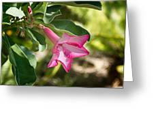 Fushia Oleander Near Phoenx Arizona 1 Greeting Card by Douglas Barnett