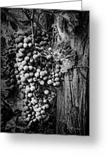 Future Wine Greeting Card by Jeff Swanson
