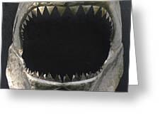 Gaint Shark Jaw Sculpture Greeting Card by Stuart Peterman