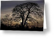Garry Oak Sunset Greeting Card by Inge Riis McDonald