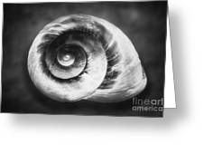 Gastropod Helix Greeting Card by George Oze