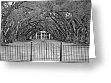 Gateway To The Old South Monochrome Greeting Card by Steve Harrington