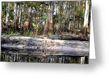 Gator Country Greeting Card by Bob Jackson