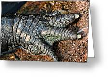Gator Manicure Greeting Card by Karol  Livote