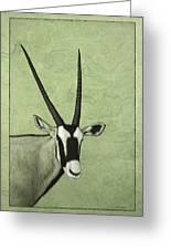 Gemsbok Greeting Card by James W Johnson