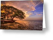 Gentle Whisper Greeting Card by Marvin Spates