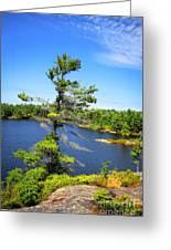 Georgian Bay Pine Tree Greeting Card by Charline Xia