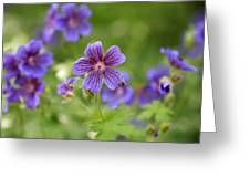 Geranium Himalayense Greeting Card by Frank Tschakert