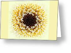 Gerbera Closeup Greeting Card by The Creative Minds Art and Photography