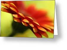 Gerbera Daisy Flower II Greeting Card by Natalie Kinnear