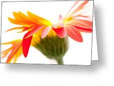 Gerbera Mix Crazy Flower - Orange Yellow Greeting Card by Natalie Kinnear