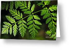 Gereric Vegetation Greeting Card by Carlos Caetano