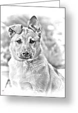 German Shepard Puppy Greeting Card by James BO  Insogna