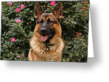German Shepherd Dog Greeting Card by Sandy Keeton