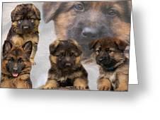 German Shepherd Puppy Collage Greeting Card by Sandy Keeton