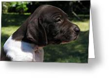 German Shorthaired Pointer Puppy Greeting Card by James Hammen