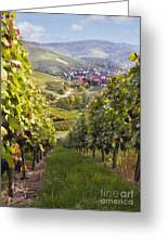 German Vineyard Greeting Card by Sharon Foster