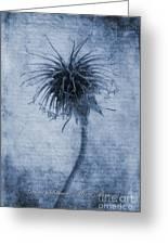Geum Urbanum Cyanotype Greeting Card by John Edwards
