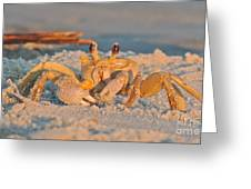 Ghost Crab Greeting Card by Eve Spring