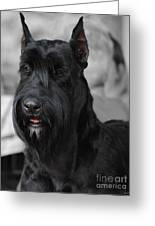 Giant Schnauzer Greeting Card by Jai Johnson