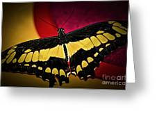 Giant Swallowtail Butterfly Greeting Card by Elena Elisseeva
