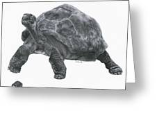 Giant Tortoise Greeting Card by Lucy D