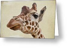 Giraffe Close Up Greeting Card by Svetlana Sewell