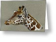 Giraffe Head Study Greeting Card by Juan  Bosco