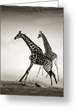Giraffes Fleeing Greeting Card by Johan Swanepoel