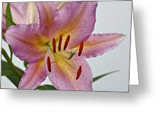 Girosa Lily Greeting Card by Sandy Keeton