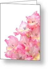 Gladiolus Greeting Card by Olivier Le Queinec