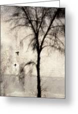 Glimpse Of A Coastal Pine Greeting Card by Carol Leigh