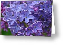 Glorious Lilac Bloom Greeting Card by Juergen Roth