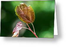 Glossy Nature - Featured 3 Greeting Card by Alexander Senin