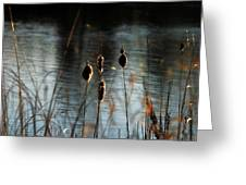 Glowing Cattails Greeting Card by Dorothy Pinder