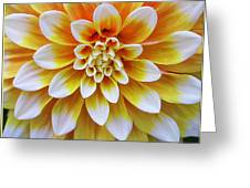 Glowing Dahlia Greeting Card by  Photographic Art and Design by Dora Sofia Caputo