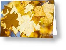 Glowing Fall Maple Leaves Greeting Card by Elena Elisseeva