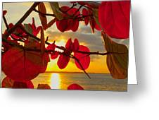 Glowing Red Greeting Card by Stephen Anderson