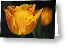 Glowing Tulips Greeting Card by Rona Black
