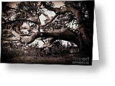 Gnarly Limbs At The Ashley River In Charleston Greeting Card by Susanne Van Hulst