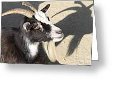 Goat 7d27402 Greeting Card by Wingsdomain Art and Photography
